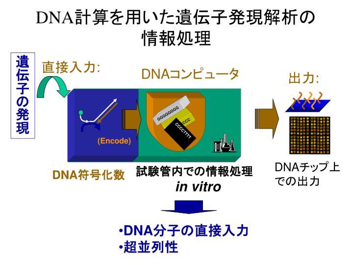 遺伝子の発現