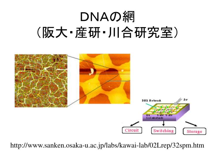 DNAの網