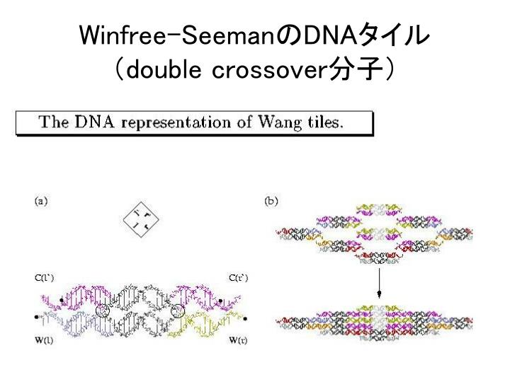 Winfree-Seeman