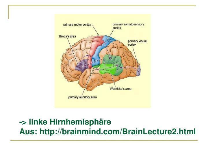 -> linke Hirnhemisphäre