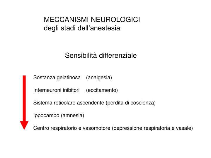 MECCANISMI NEUROLOGICI