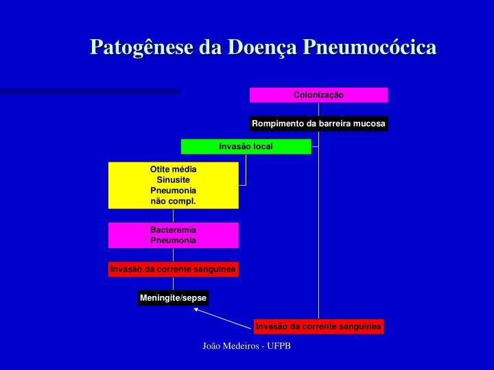 Patogênese da Doença Pneumocócica
