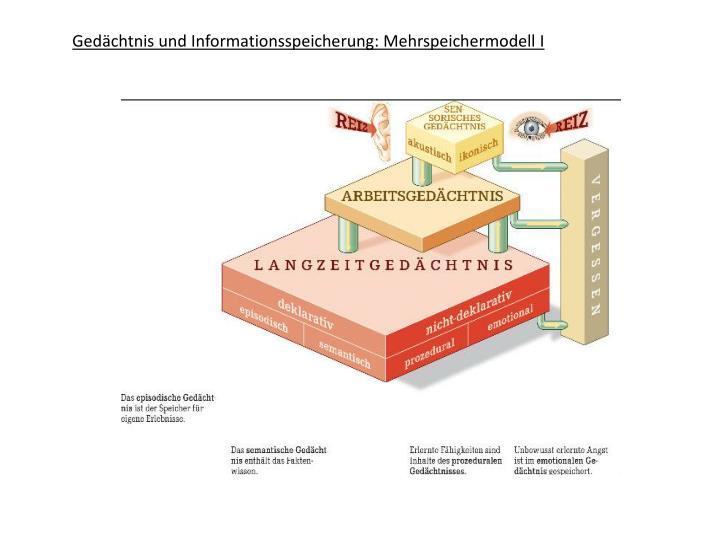 Gedächtnis und Informationsspeicherung: Mehrspeichermodell I