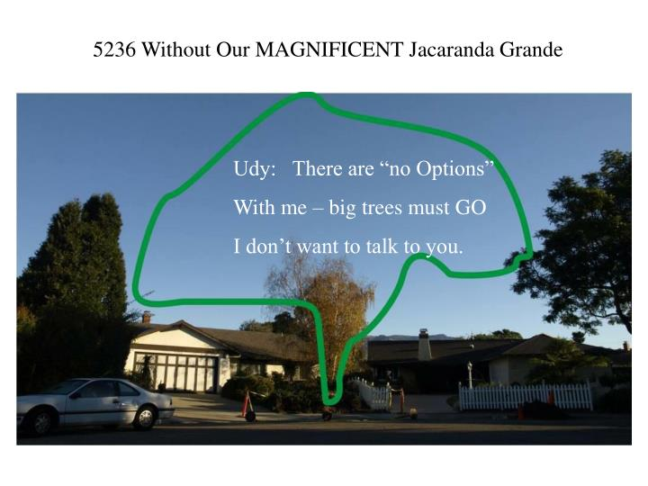 5236 Without Our MAGNIFICENT Jacaranda Grande