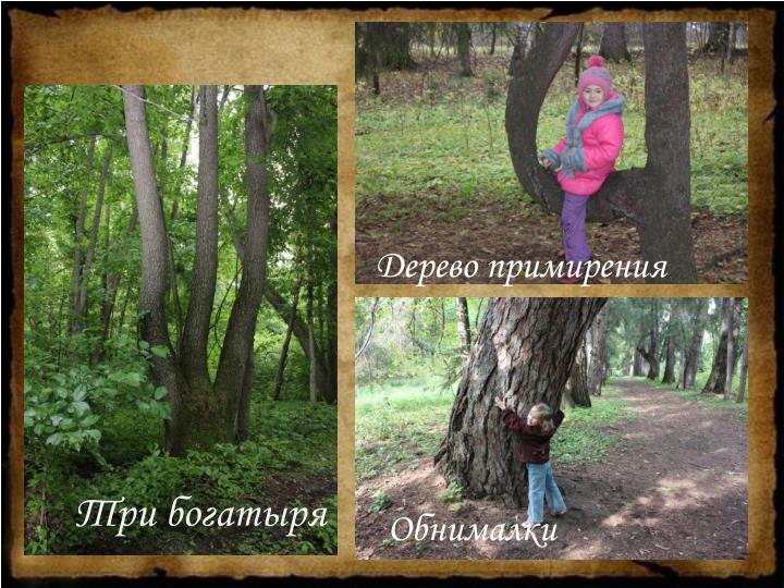 Дерево примирения