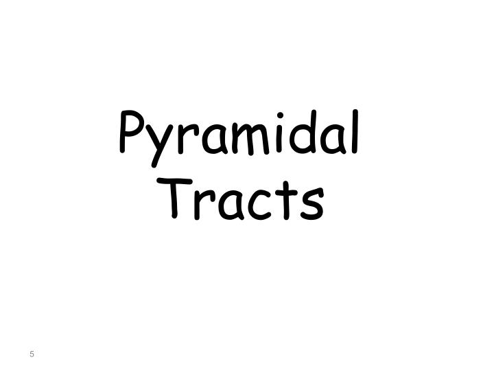 Pyramidal Tracts
