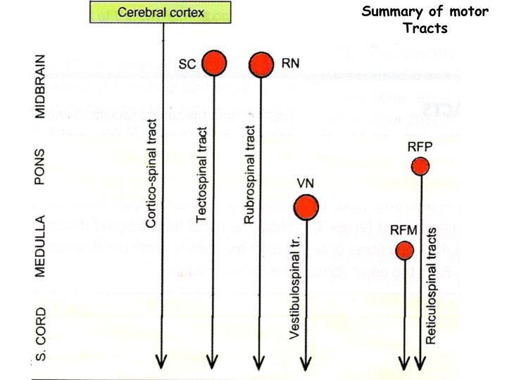 Summary of motor Tracts