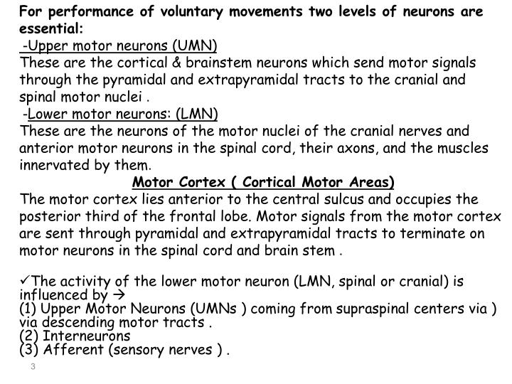 For performance of voluntary movements two levels of neurons are essential