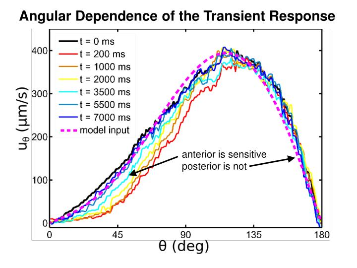 Angular Dependence of the Transient Response
