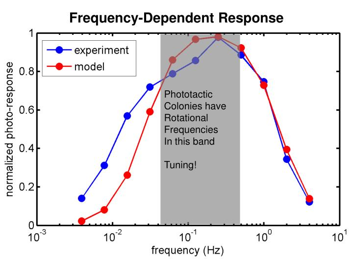Frequency-Dependent Response