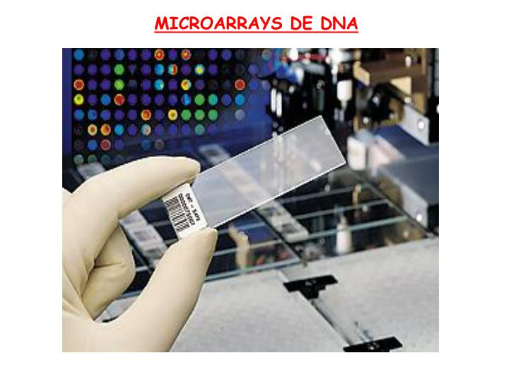 MICROARRAYS DE DNA