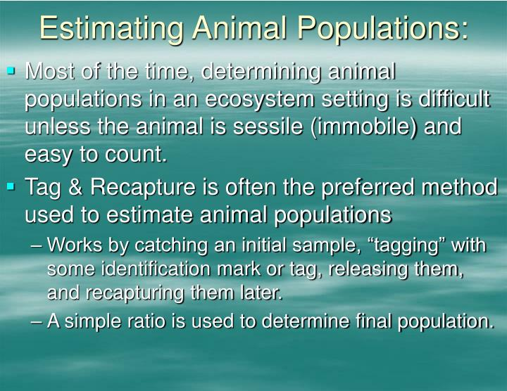 Estimating Animal Populations: