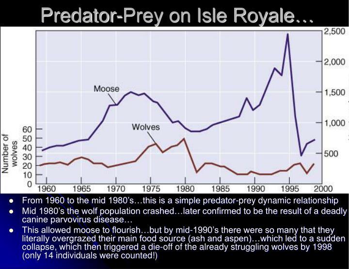 Predator-Prey on Isle Royale…