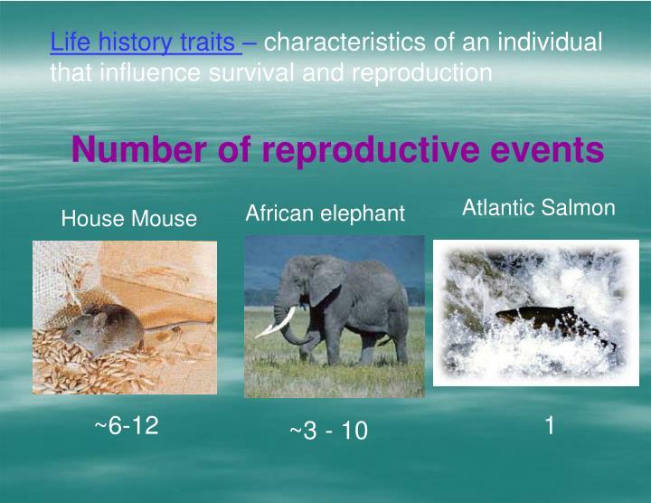 Life history traits