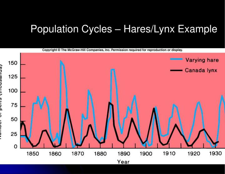Population Cycles – Hares/Lynx Example