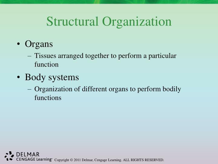 Structural Organization