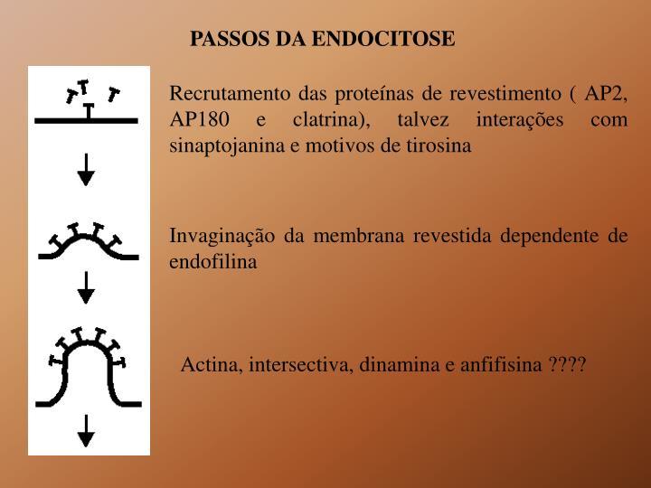 PASSOS DA ENDOCITOSE
