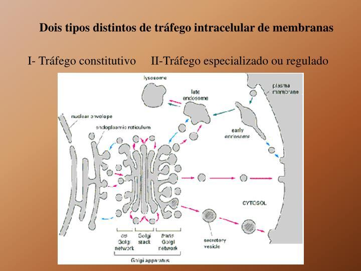 Dois tipos distintos de tráfego intracelular de membranas