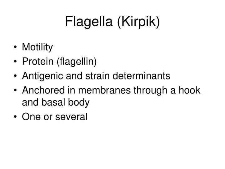 Flagella (Kirpik)