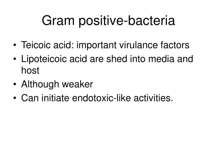 Gram positive-bacteria