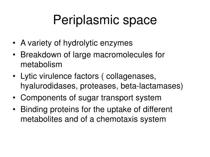 Periplasmic space