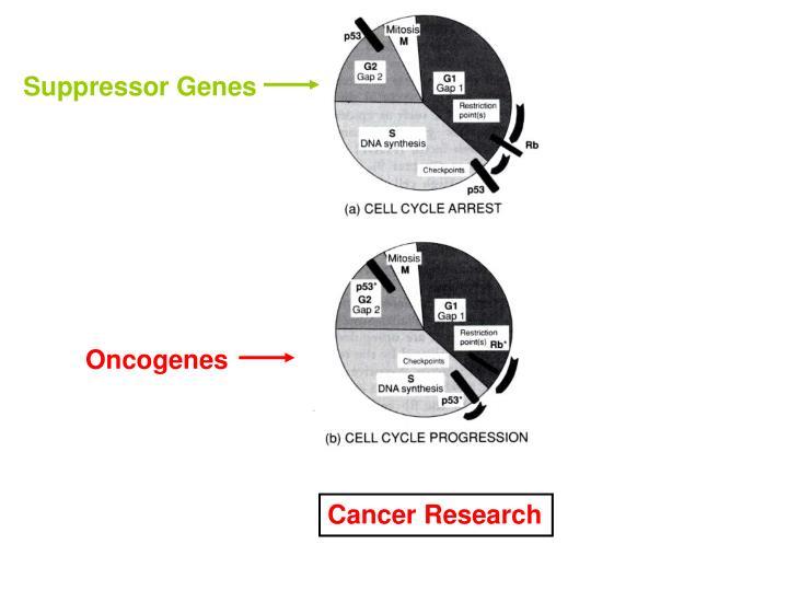 Suppressor Genes