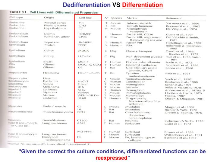 Dedifferentiation