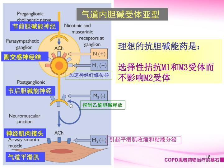 气道内胆碱受体亚型