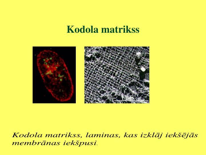 Kodola matrikss