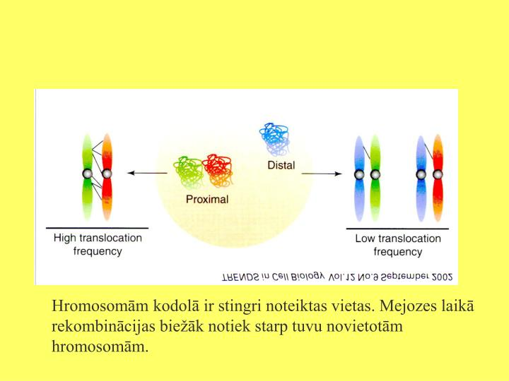 Hromosomām kodolā ir stingri noteiktas vietas. Mejozes laikā rekombinācijas biežāk notiek starp tuvu novietotām hromosomām.