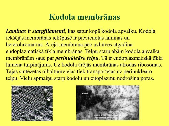 Kodola membrānas
