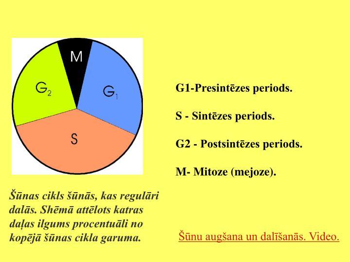G1-Presintēzes periods.