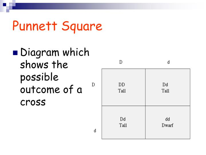 PPT - Introduction to Genetics PowerPoint Presentation ...