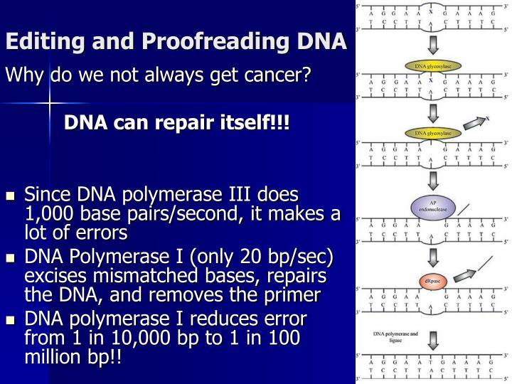 Editing and Proofreading DNA