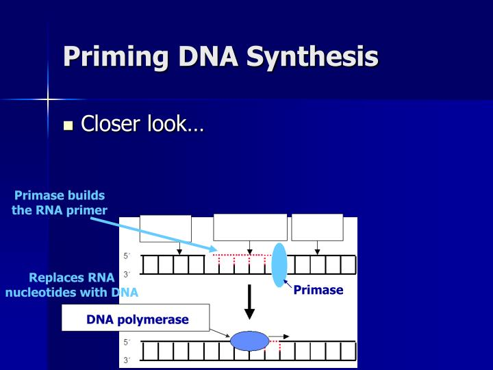 Priming DNA Synthesis
