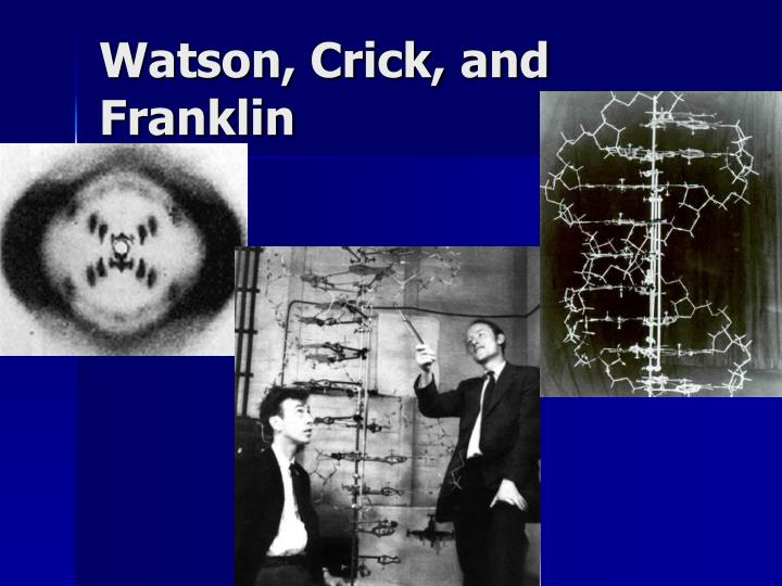 Watson, Crick, and Franklin