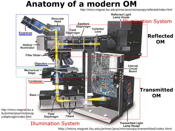 Anatomy of a modern OM