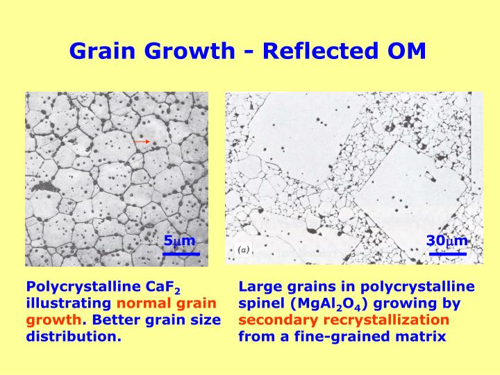 Grain Growth - Reflected OM