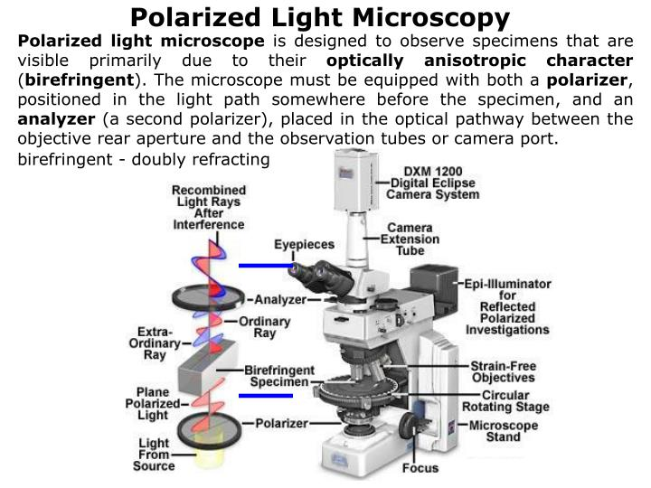 Polarized light microscope