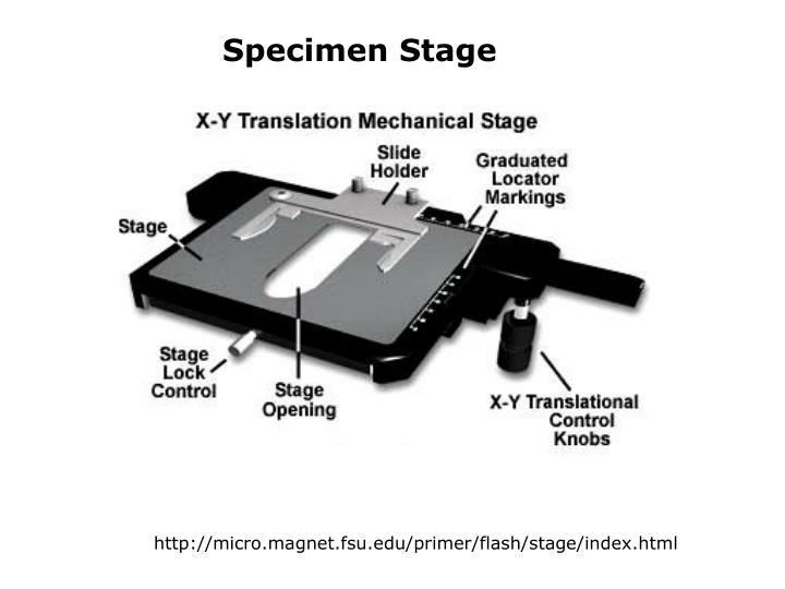 Specimen Stage