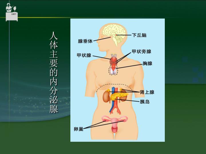 人体主要的内分泌腺