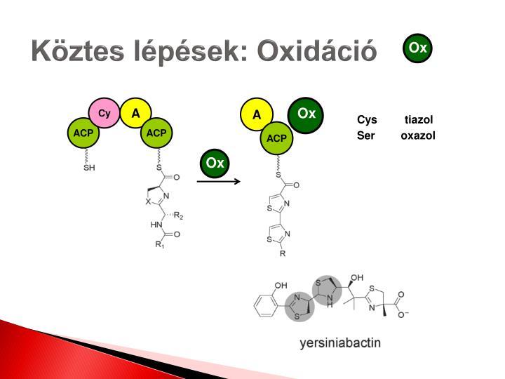 Köztes lépések: Oxidáció