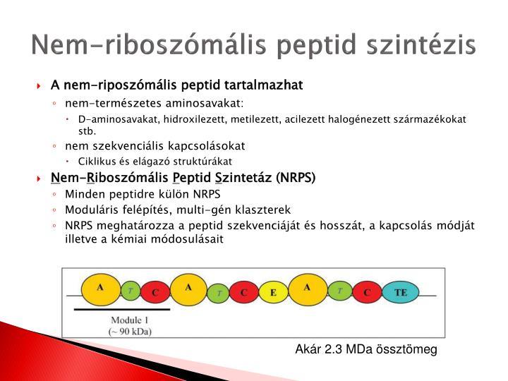 Nem-riboszómális peptid szintézis