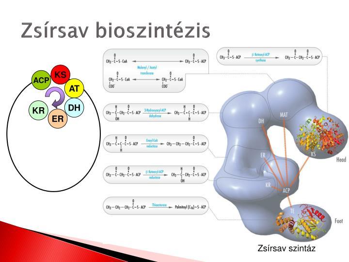 Zsírsav bioszintézis