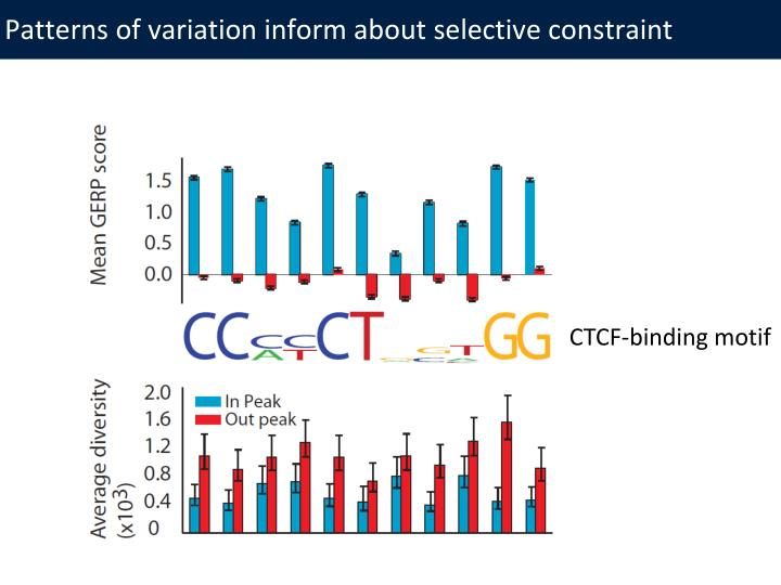 Patterns of variation inform about selective constraint