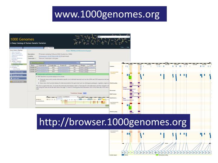 www.1000genomes.org