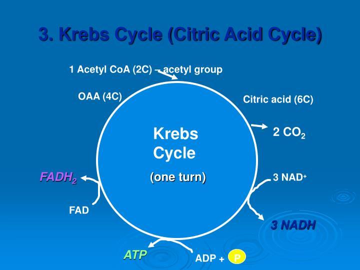 1 Acetyl CoA (2C) – acetyl group