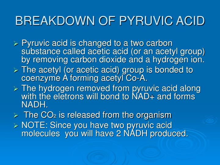 BREAKDOWN OF PYRUVIC ACID