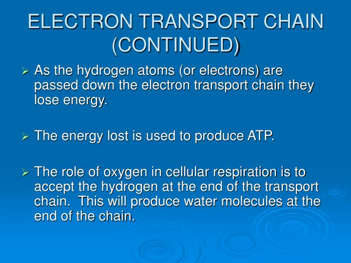 ELECTRON TRANSPORT CHAIN (CONTINUED)