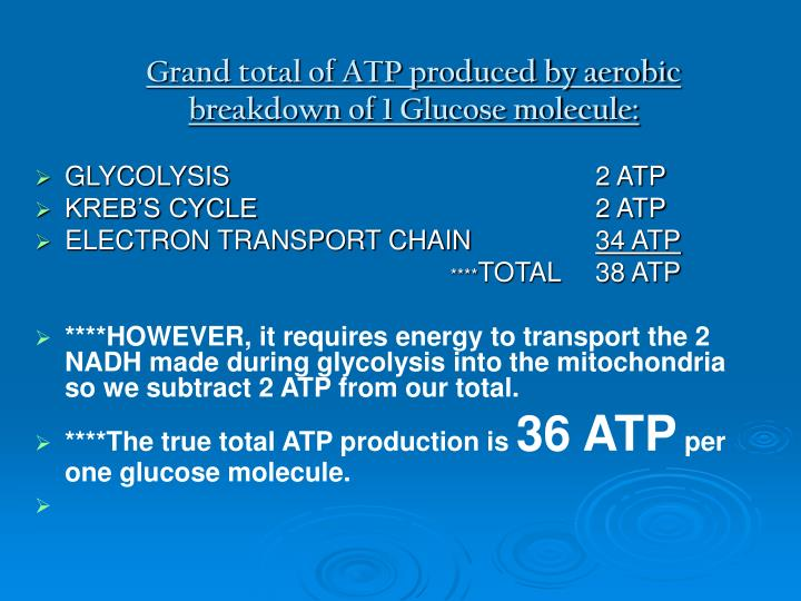 Grand total of ATP produced by aerobic breakdown of 1 Glucose molecule:
